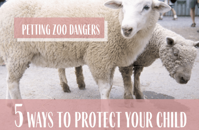 Petting Zoo Dangers 5 Ways to Protect Your Child Zoo