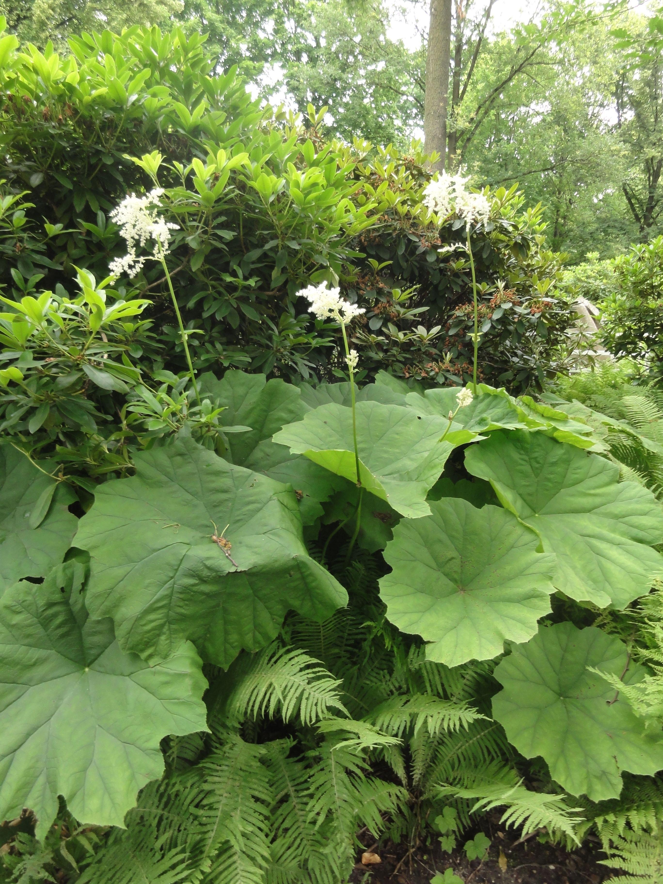 Pflanzen Schattig Trocken Pflanzen Vielfalt Der Saatgut Shop
