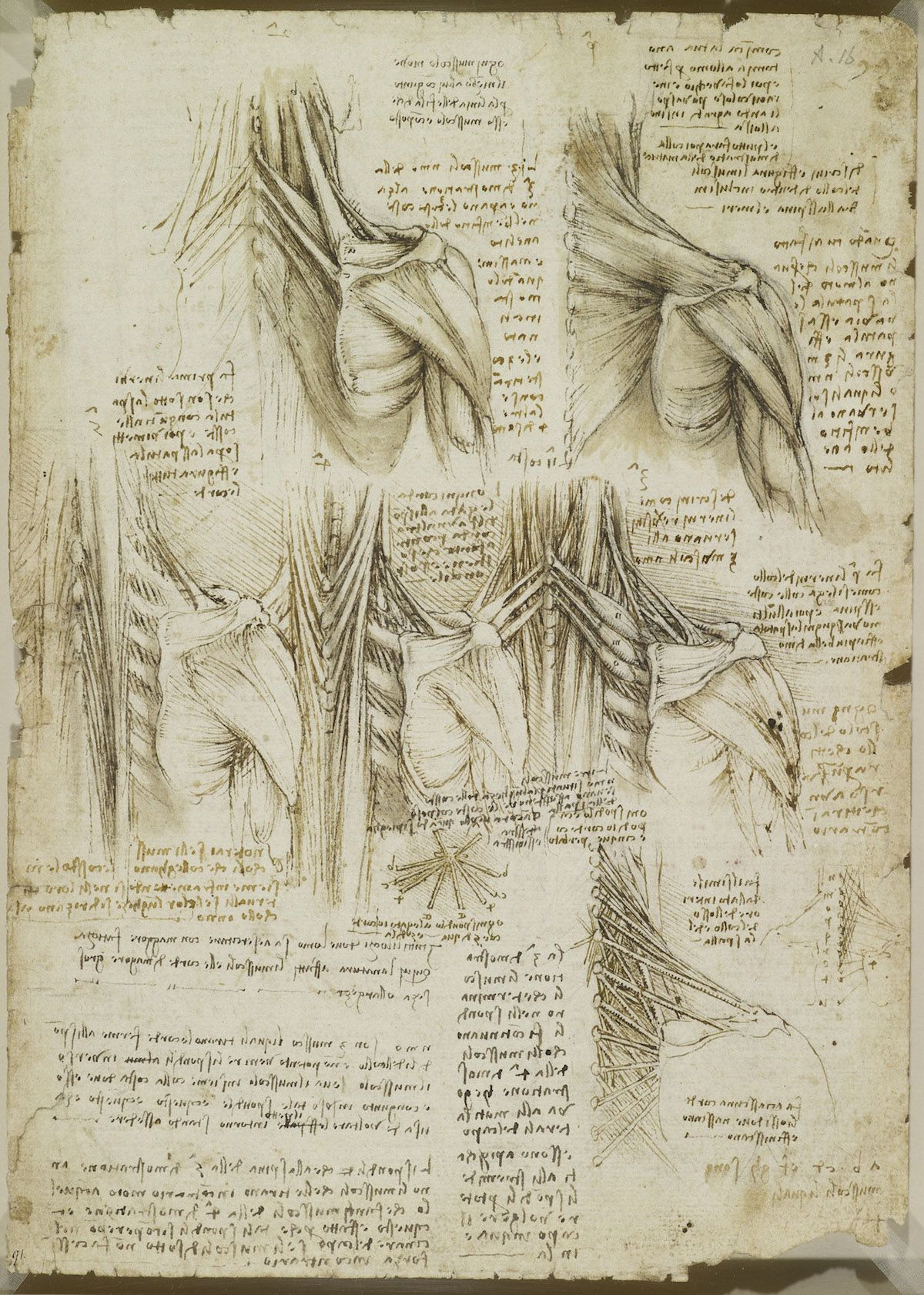 Body Maps Leonardo Da Vincis Anatomical Drawings Immortals