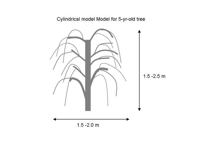 Goji Berry Tree Bush Pruning Model