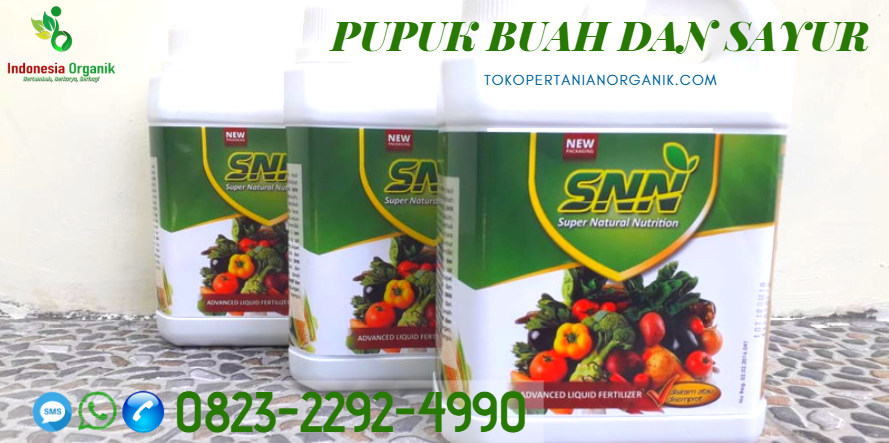 Musim Panen Kebun Strawberry Purbalingga