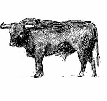 Comment dessiner un taureau deco comment dessiner - Dessin de toro ...