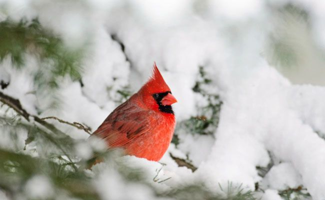 Help Show Birds Some Love During This Year's Great Backyard Bird Count
