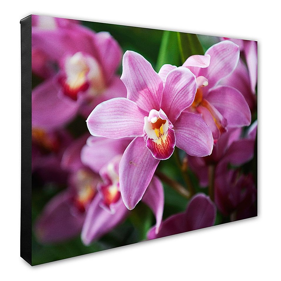 Photo File Pink Orchid Flowers Canvas Wall Art Multi Flower
