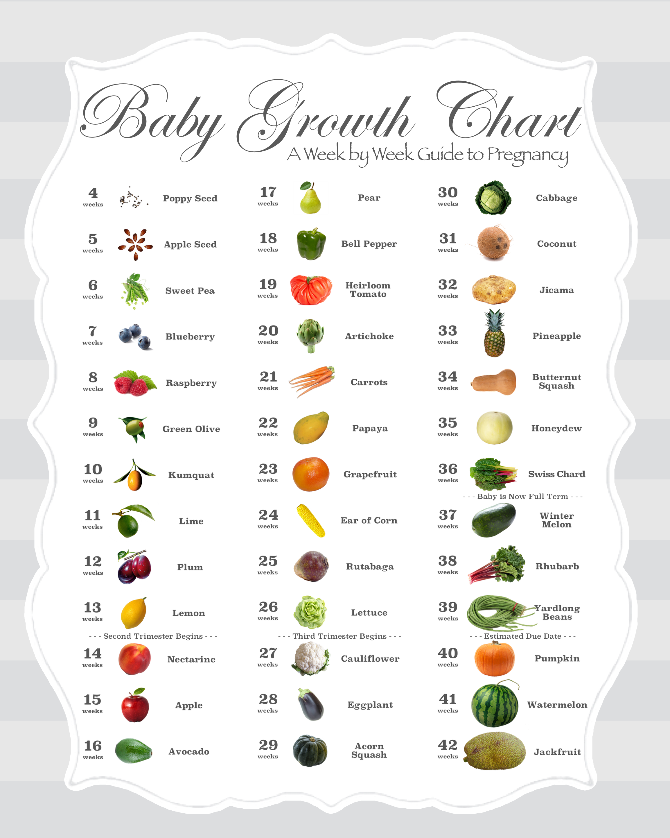 Pin on Baby Size Charts and Timelines