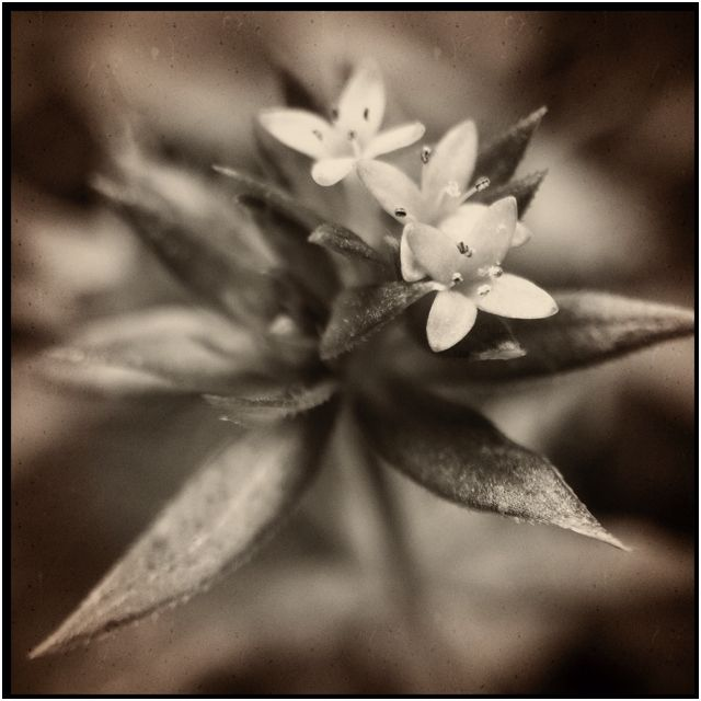 iPhone #macro (photo: @kellyjowen)