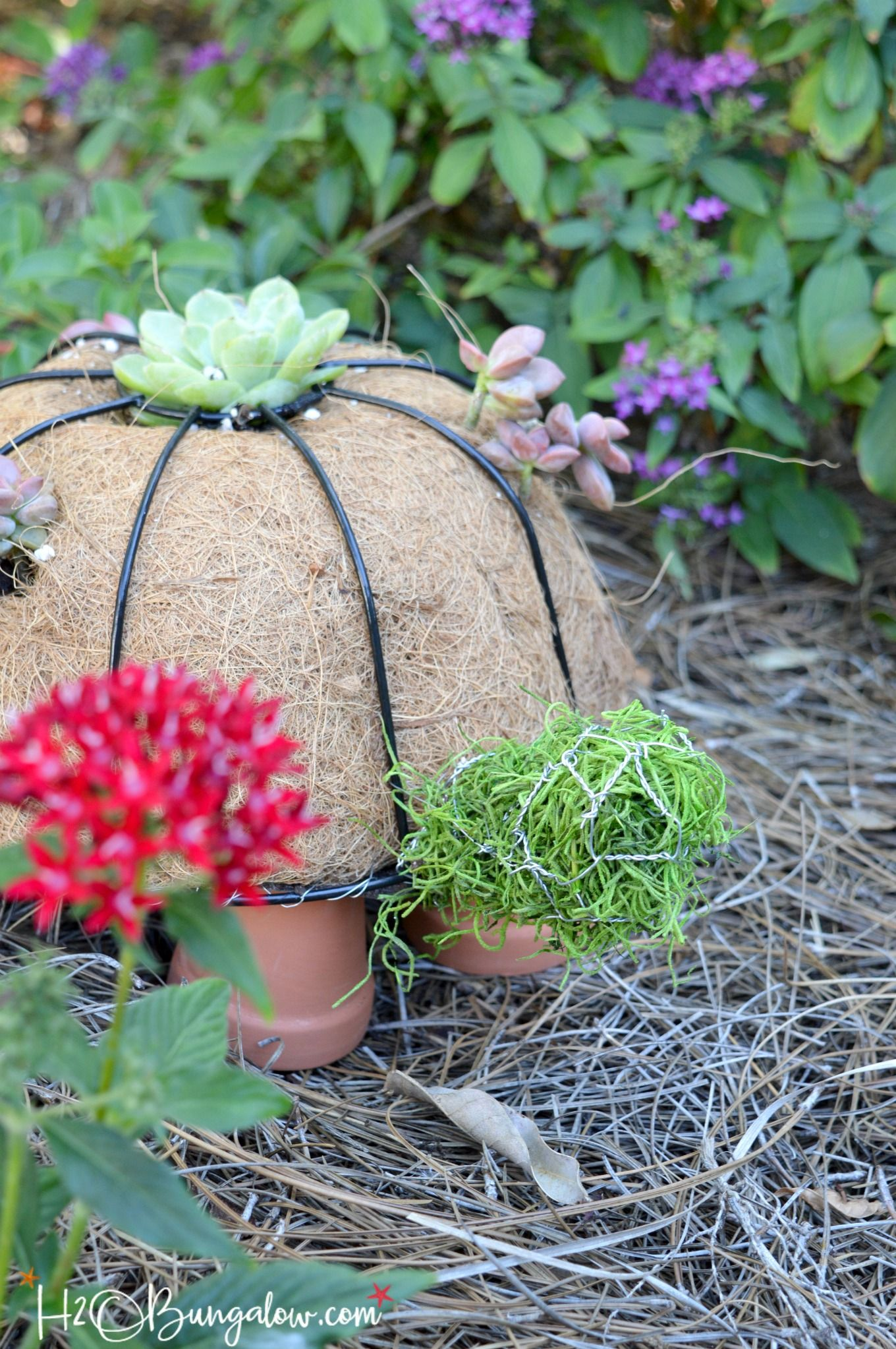 How to Make a DIY Turtle Topiary | Diy garden decor, Topiary and Cacti