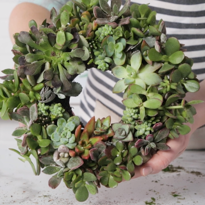 Photo of How to Make a Succulent Wreath – Easy DIY Wreath Idea