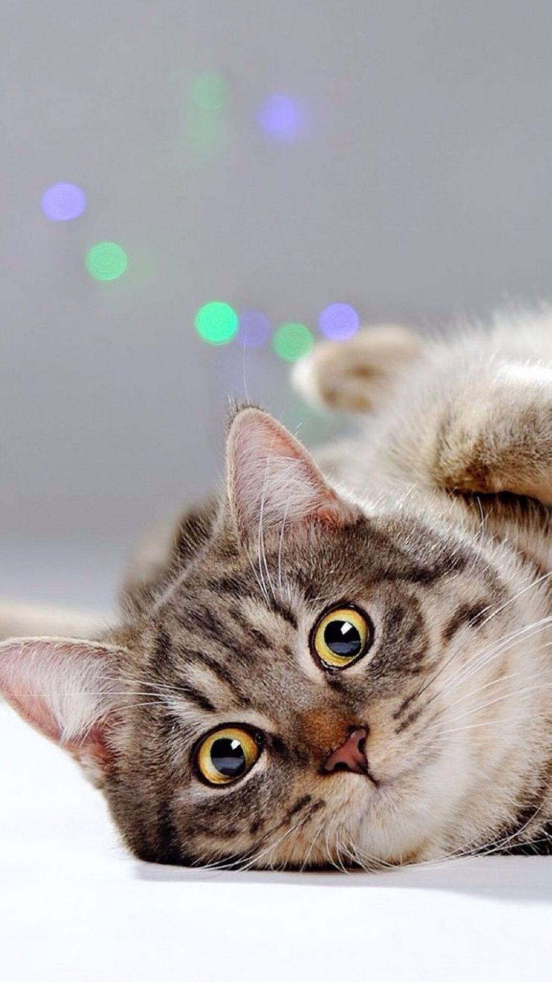 Animal wallpaper, Iphone wallpaper cat ...
