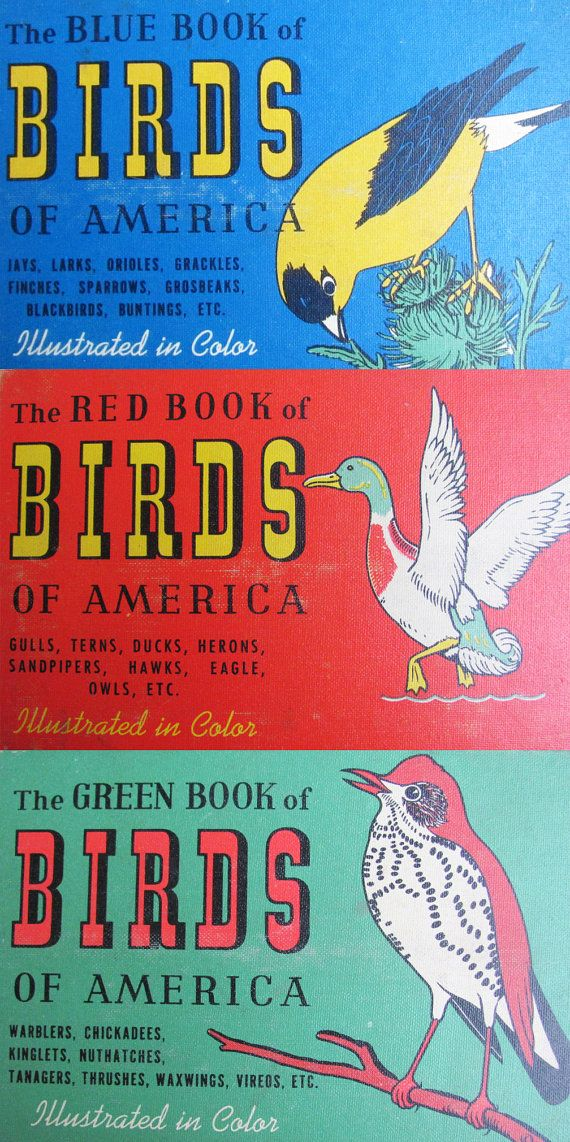 vintage 1940s Blue Book of Birds // field guide by MouseTrapVintage ...