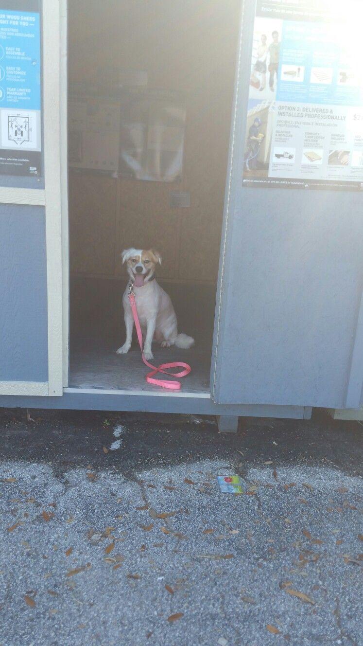Image By Sit Happens Jacksonville On Sit Happens Jax Dog Training