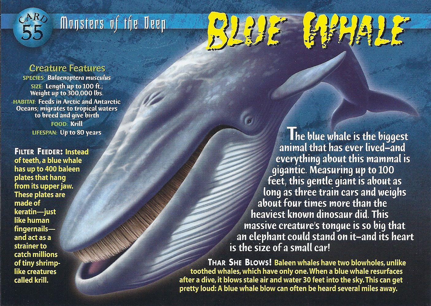 Enchanting Whale Anatomy Dork Inspiration - Anatomy and Physiology ...
