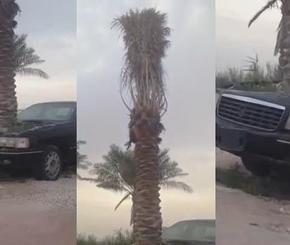 تيربو العرب آخر أخبار السيارات العربية والعالمية صور سيارات فيديو سيارات Plants