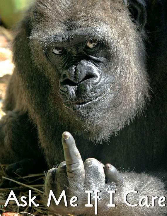 Mundo DSE - Digital Magazine: 35 fotos de animais muito engraçados