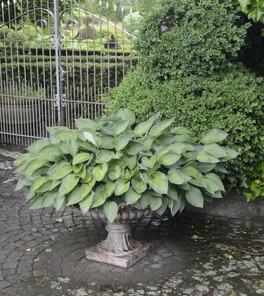 Large Container Planting Ideas. Cheap Amazing Ideas Large Container ...