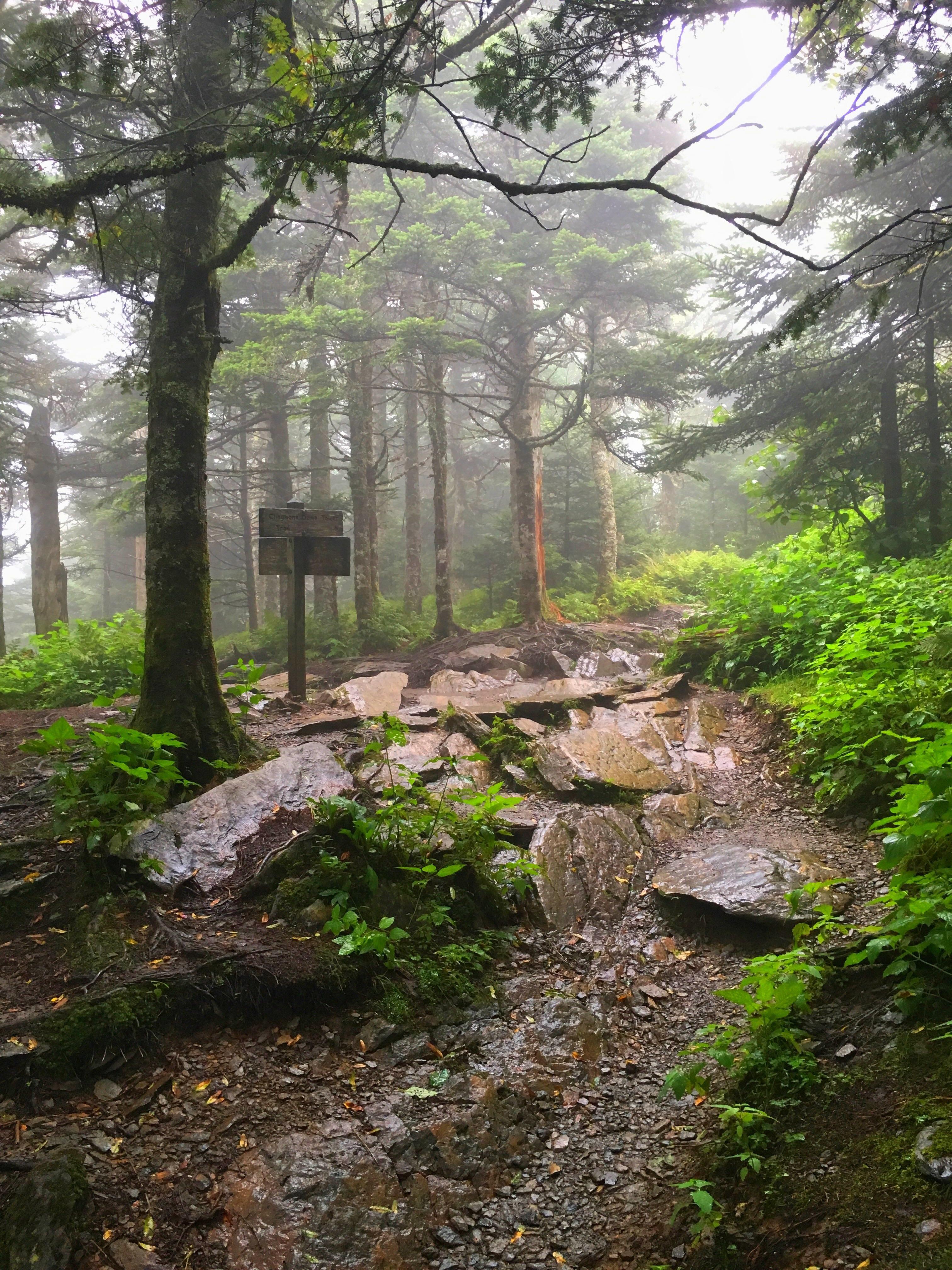 Appalachian Trail Near Clingmans Dome Tn Nc Usa Hiking Camping Outdoors Nature Travel Backpacking Appalachian Trail Hiking Appalachian Trail Hiking Usa