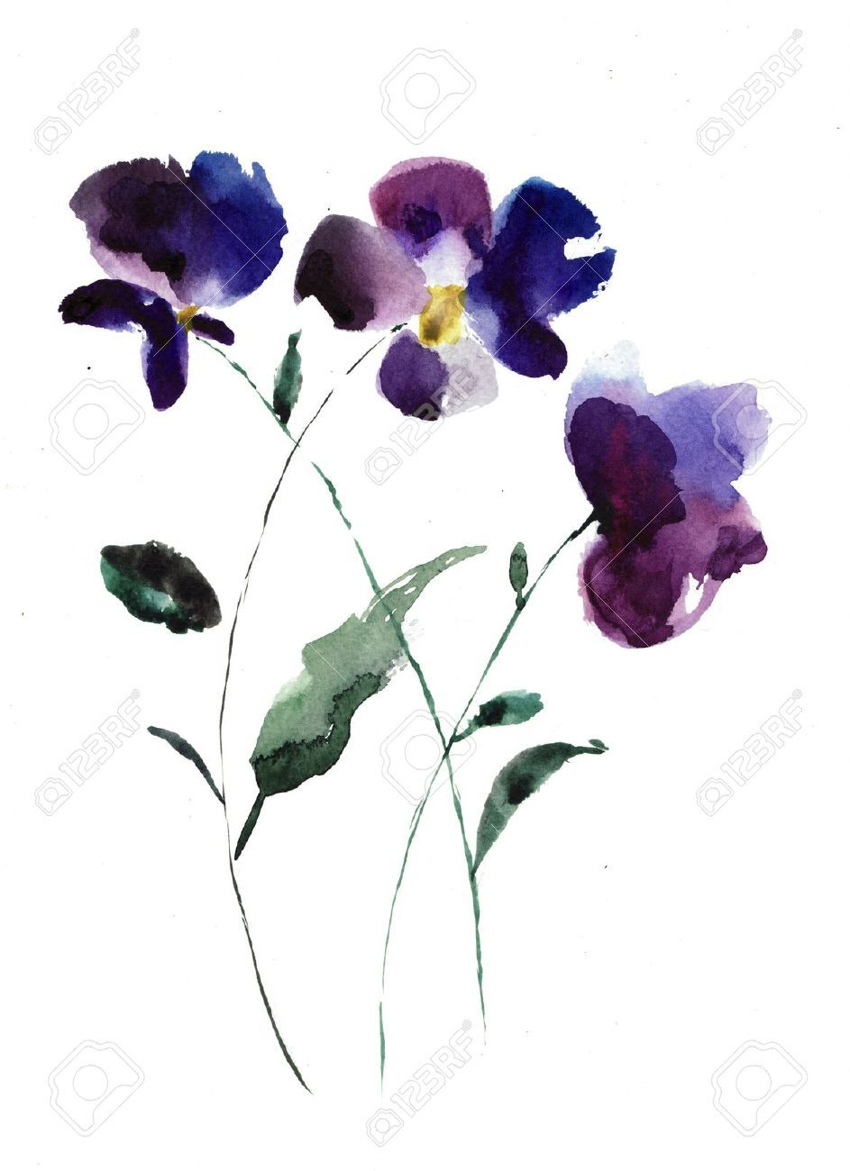 Line Drawing Violet : Watercolor illustration of violet flowers stock photo