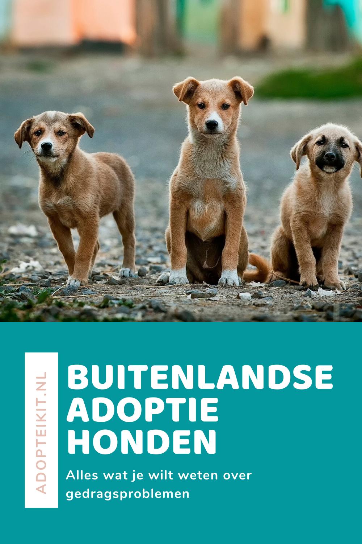 Buitenlandse adoptiehonden ook wel bekend als zwerfhonden
