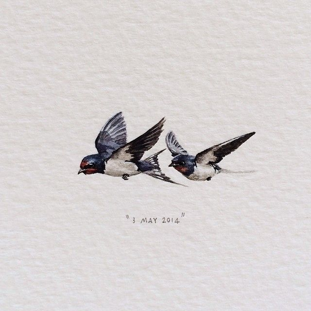 Day 123: Barn Swallows | Hirundo Rustica. 34 x 15mm. (for @quinb1…