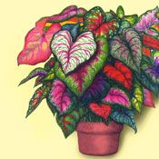 Multi-Colored Rainbow Plants with Pot