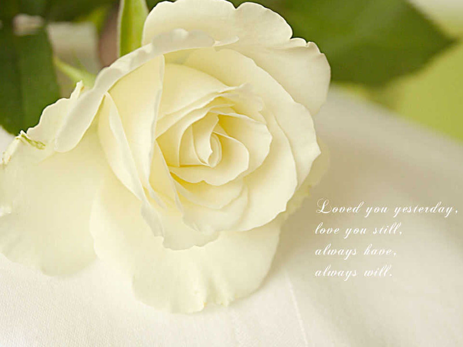 Resultado de imagem para white rose love quotes roses arrangements resultado de imagem para white rose love quotes izmirmasajfo