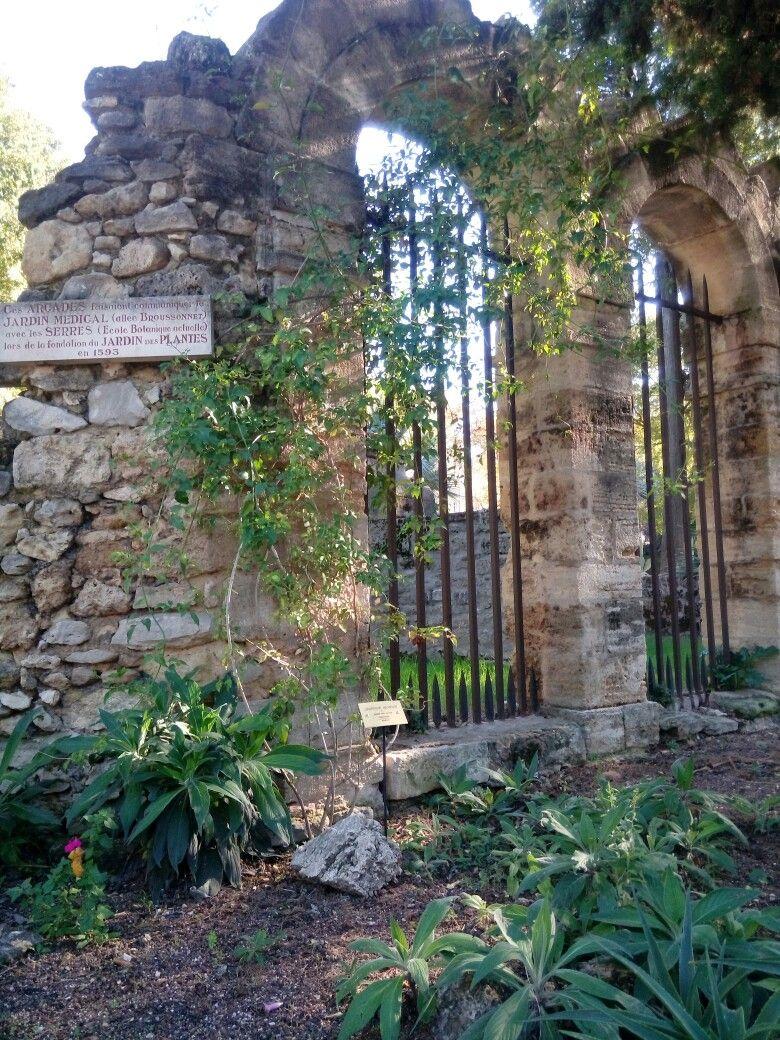 Jardin des plantes plante jardin jardins montpellier - Le jardin des plantes montpellier ...