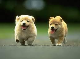 25 Best Way To Treat Fleas On Puppies Under 12 Weeks Something