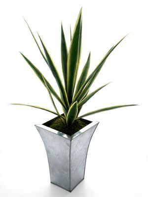 Artificial Yucca Plant Yucca plant, Plants, Large plants