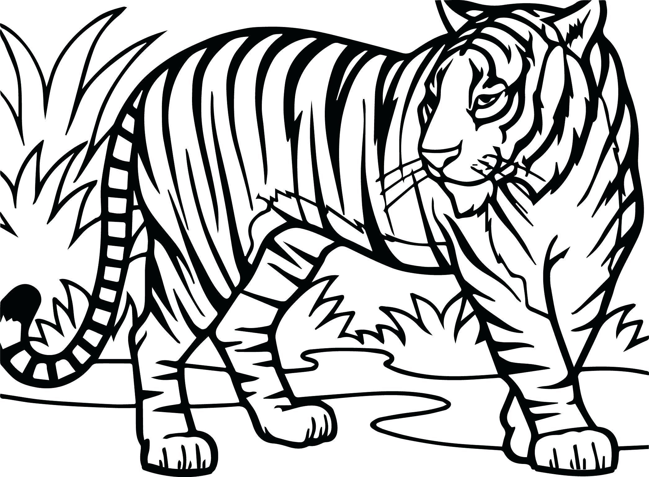 Tiger Coloring Pages Dieren Kleurplaten Boek Bladzijden Kleuren Kleurplaten Voor Volwassenen