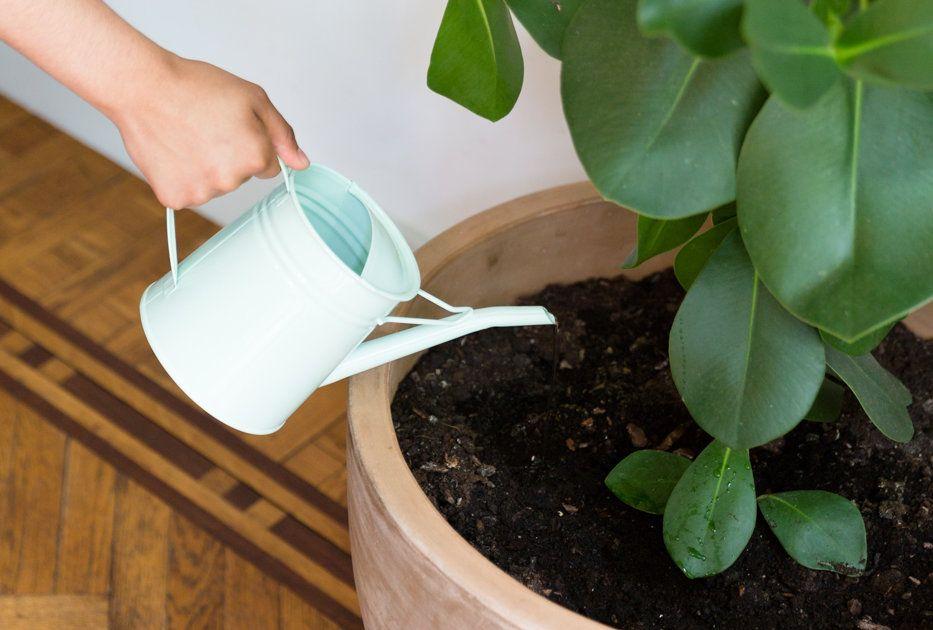 So Bleiben Pflanzen Glucklich Und Gesund In 2020 Pflanzen Pflanzen Pflege Blumenerde