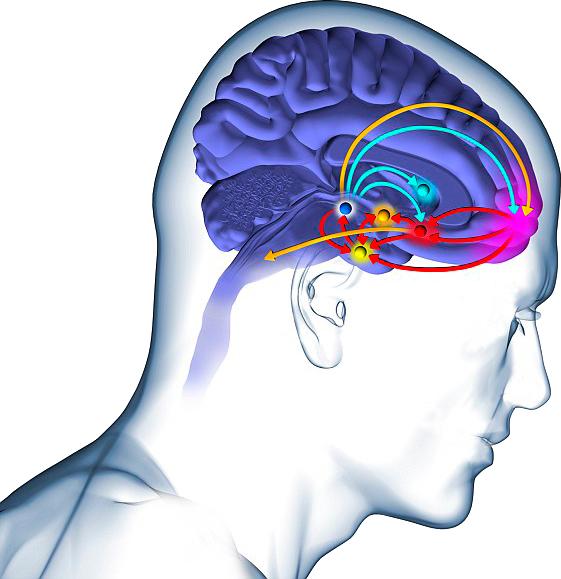 05/12/2016 - Jano.es Las zonas cerebrales asociadas con ...