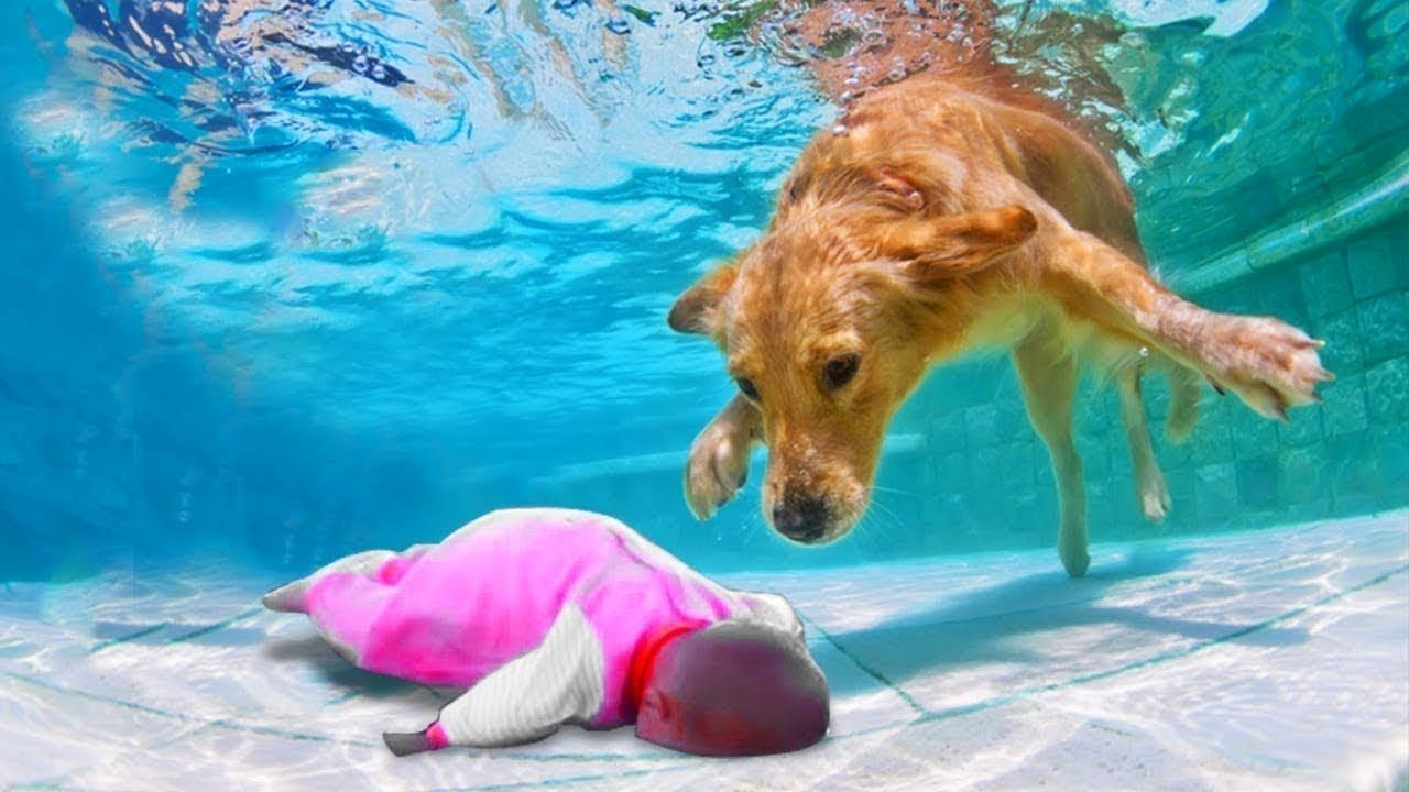 Hero Dog Saves Owner Out Of The Water Funny Dogs Video Funny