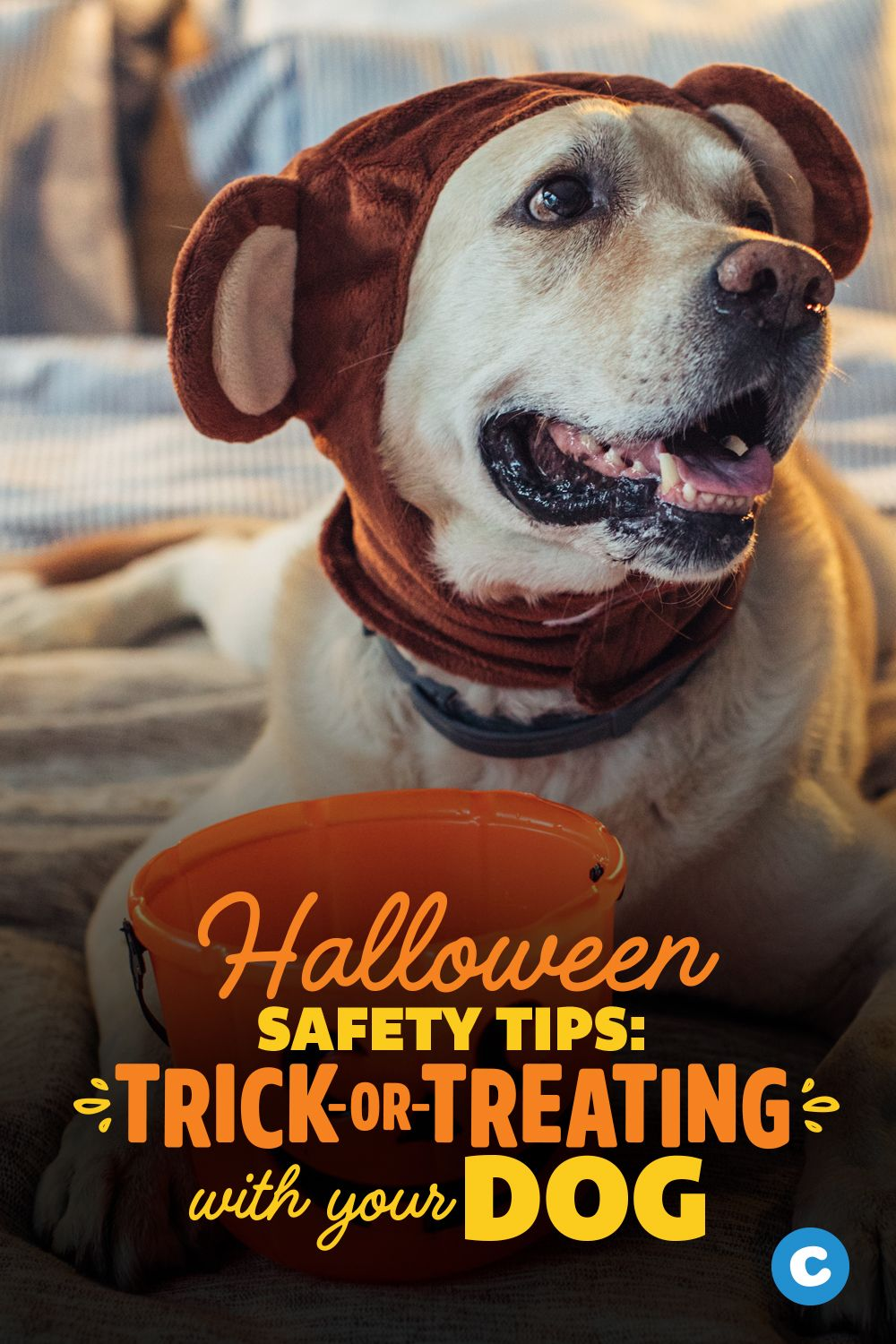 Halloween Safety Tips Trick Or Treating With Pets Halloween Safety Tips Halloween Pet Safety Halloween Safety