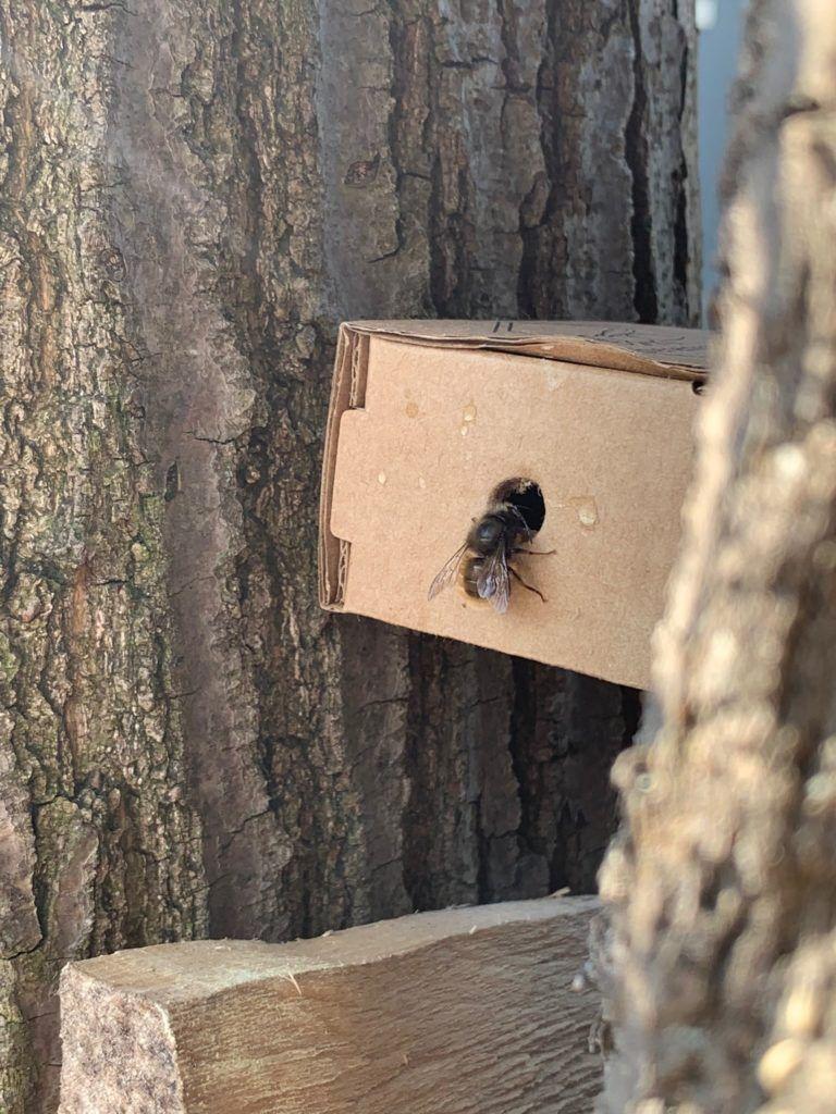 Wildbienen im Garten ansiedeln und schützen! Wildbienen züchten is part of Bee hotel, Garden care, Wild bees, Bird garden, Bee garden, Garten - Wildbienenliebe in unerem Garten! Mit Kindern die Natur erleben und begreifen  Wildbienen Hotel selber bauen  Mehr Ertrag im Garten duch Wildbienen