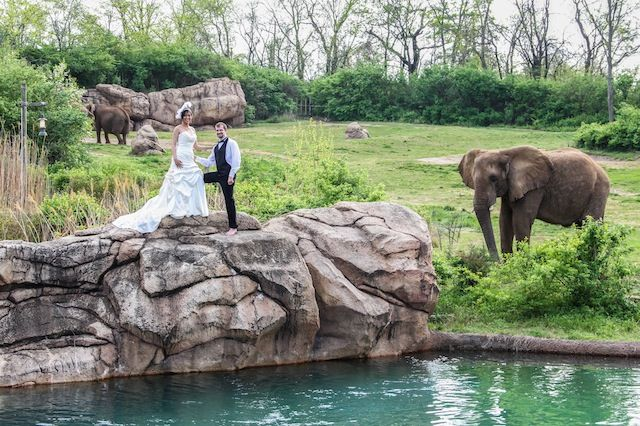 Luxury Wedding Nashville Outdoor African Themed Safari Zoo