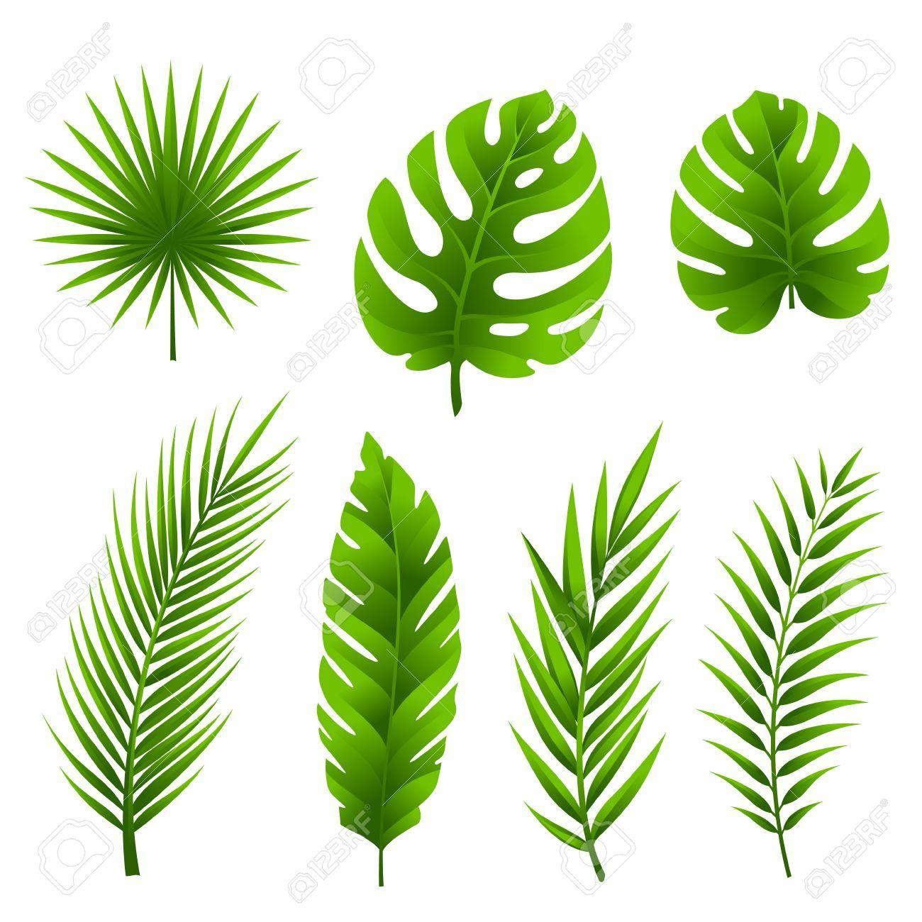 Jungle Leaves Set Tropical Palm Tree Leaves Collection Palm Tree Drawing Leaf Drawing Palm Tree Vector