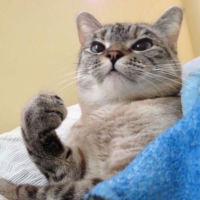 Мемы котов картинки