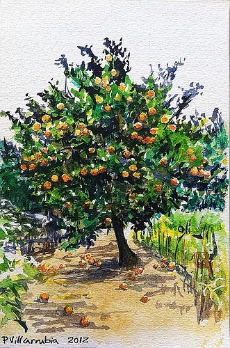 Naranjo Orange Tree Watercolor Trees Orange Tree Tree Painting