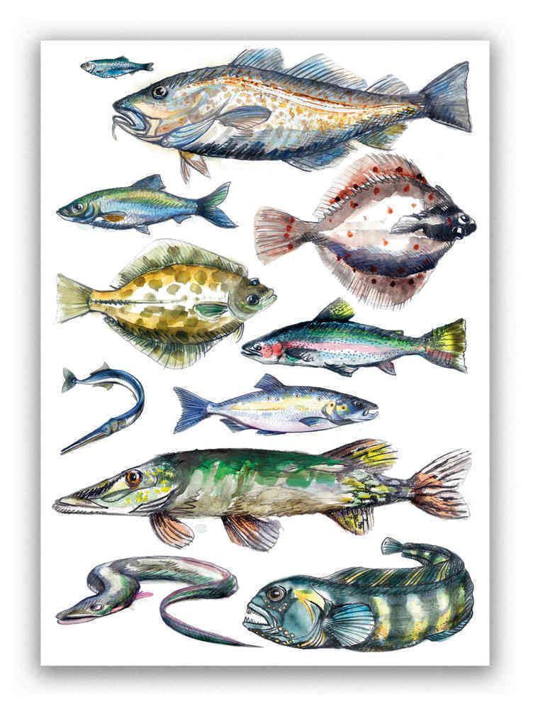 Ostseefische Postkarten Poster Papier Recycling