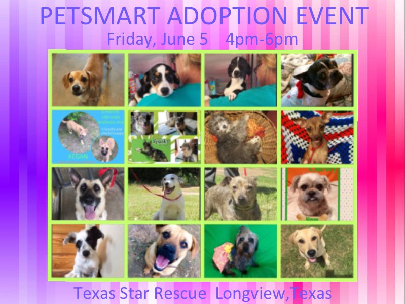 Adoption And Donation Event Friday June 5 4pm 6pm Petsmart
