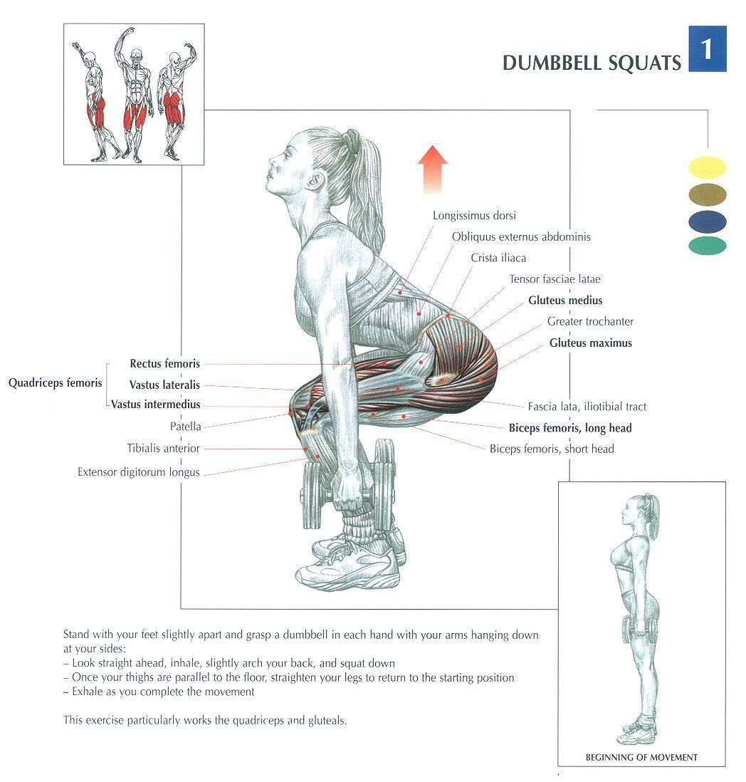 Dumbbell squats health fitness exercises diagrams body dumbbell squats health fitness exercises diagrams body muscles pooptronica Gallery