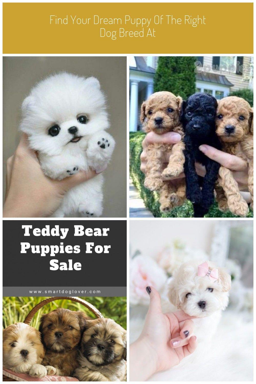 Pin On Pomeranian Dogs