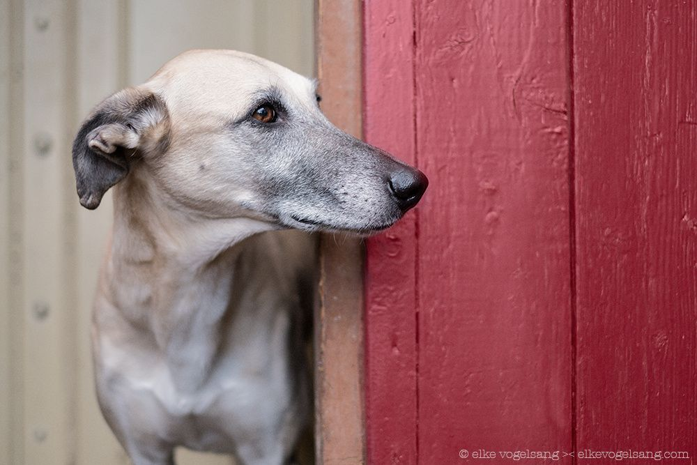 Waiting for the postman byElke Vogelsang on 500px