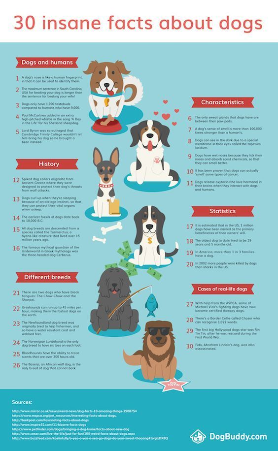 Dogs Infographic Collection You Will