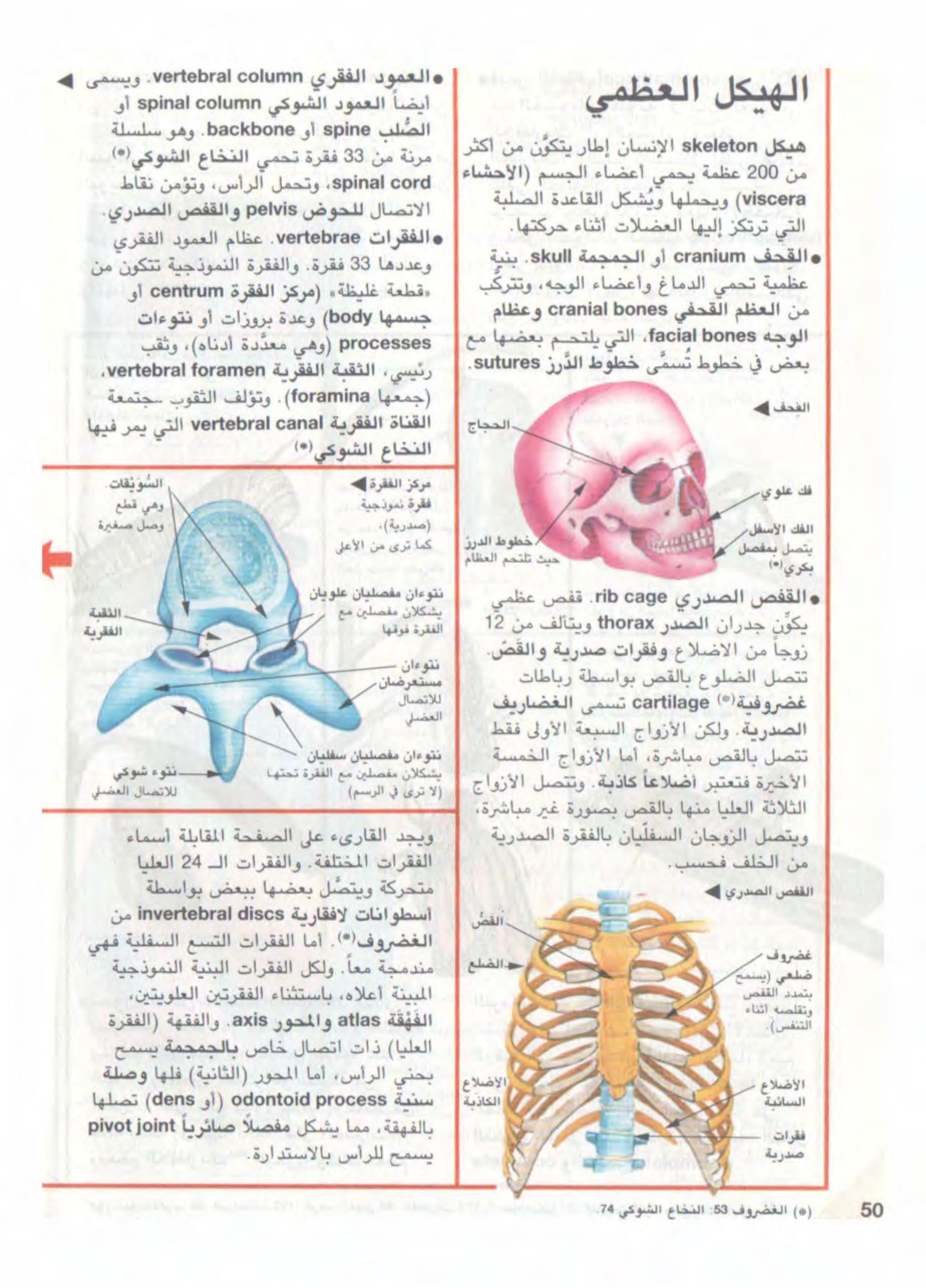 معجم البيولوجيا المصور Free Download Borrow And Streaming Internet Archive Medical Photos Food Photography Background My Books