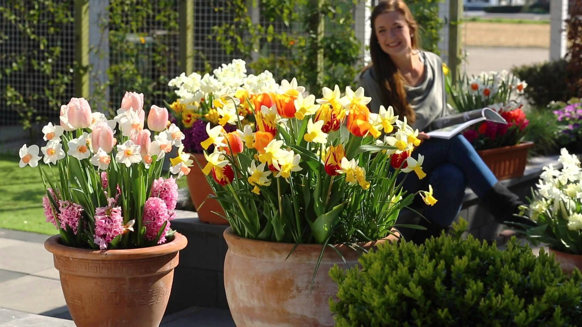 Épinglé par Isabelle Pepin sur Jardins et trucs | Planter des bulbes, Parterre de fleurs ...