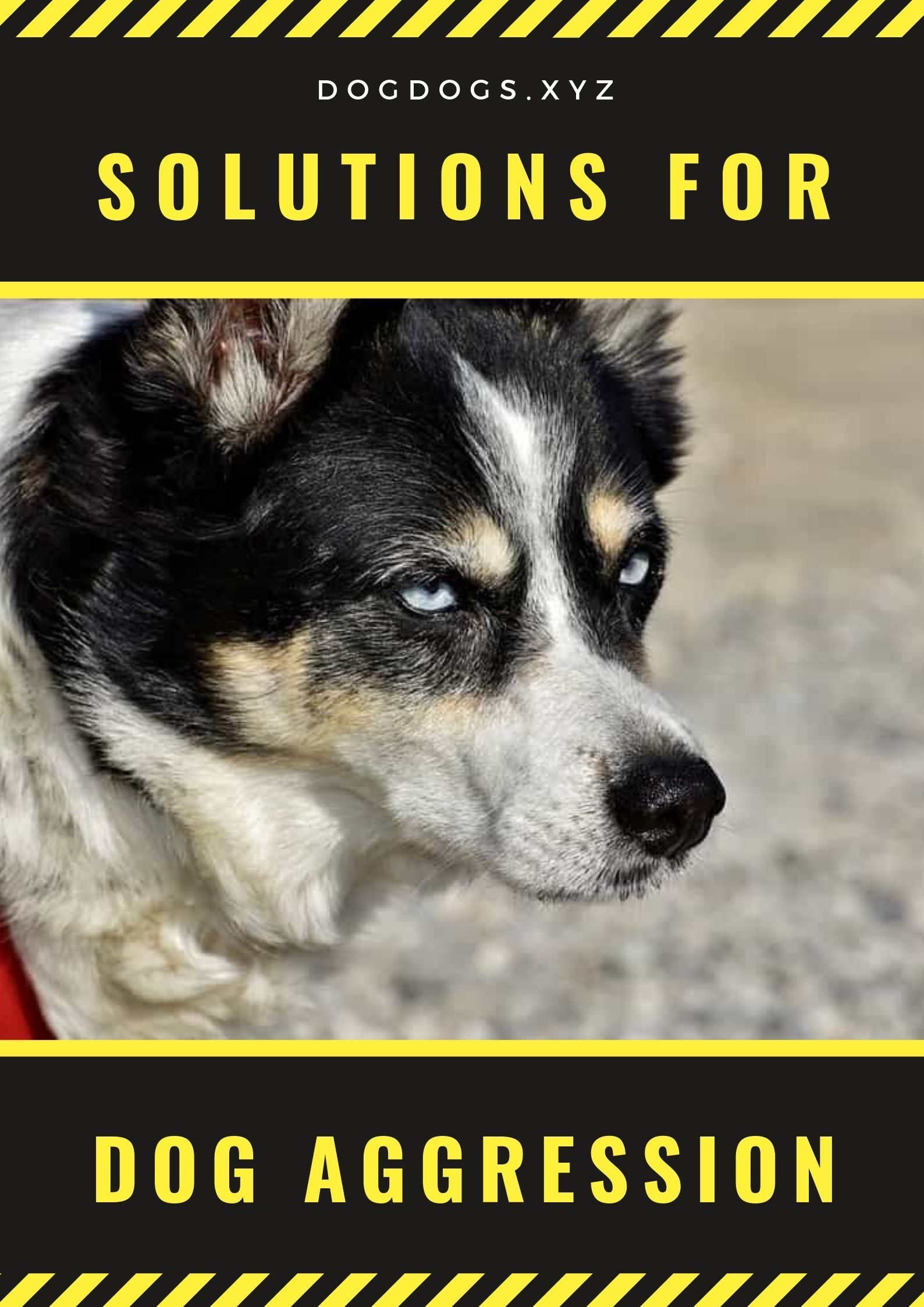 It may also be necessary for you to hire a dog training