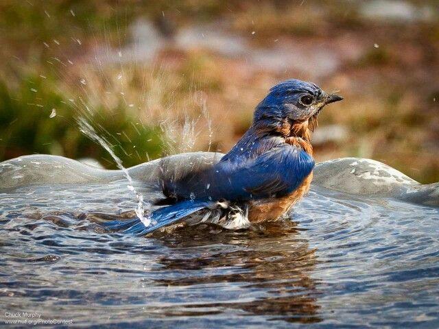 Splish, Splash, I was taking a bath!