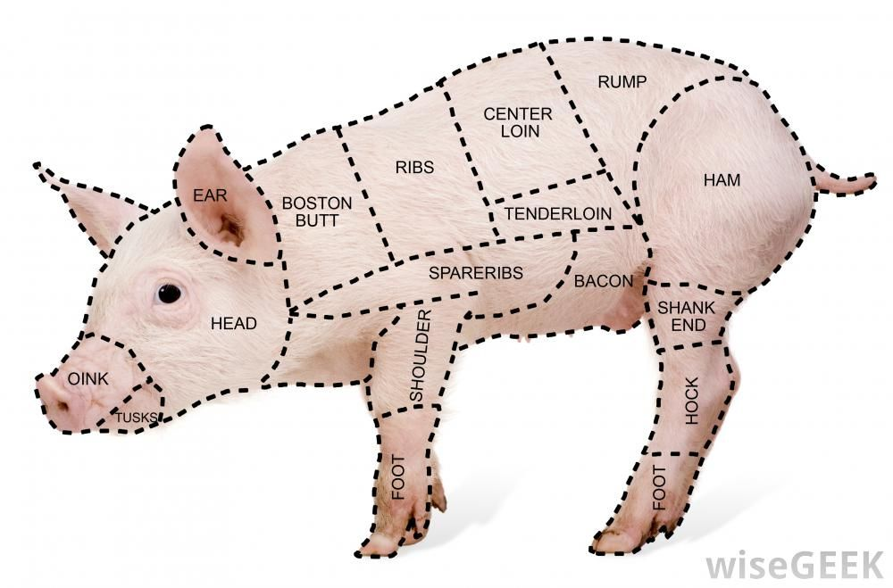 learning pig parts different cuts of pork including the shank 4 rh pinterest com  pig body parts diagram