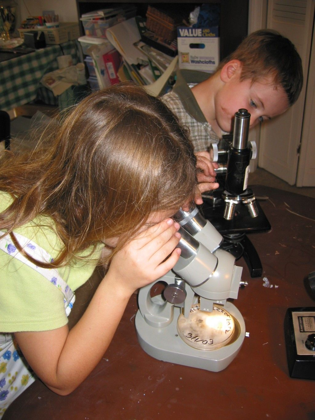 Microbiology Science Project Kids Step By Step
